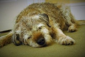 Some older pets can no longer curl up to sleep due to stiffness.