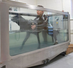I also have full training in the use of canine hydrotherapy treadmills
