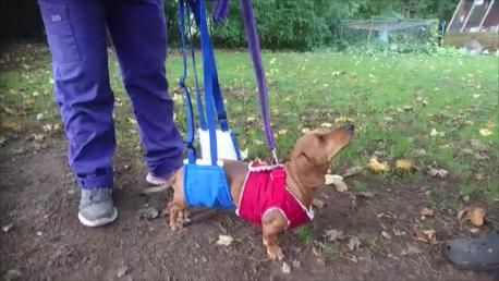 IVDD sling-walking